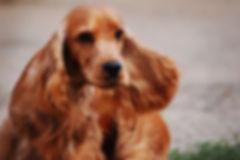 dog training bermondsey