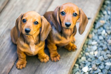 Seeing Double! The dangers of littermate syndrome
