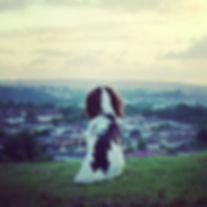 Wanderdog Dog Walking, Dog Training, Puppy School, Puppy Bermondsey