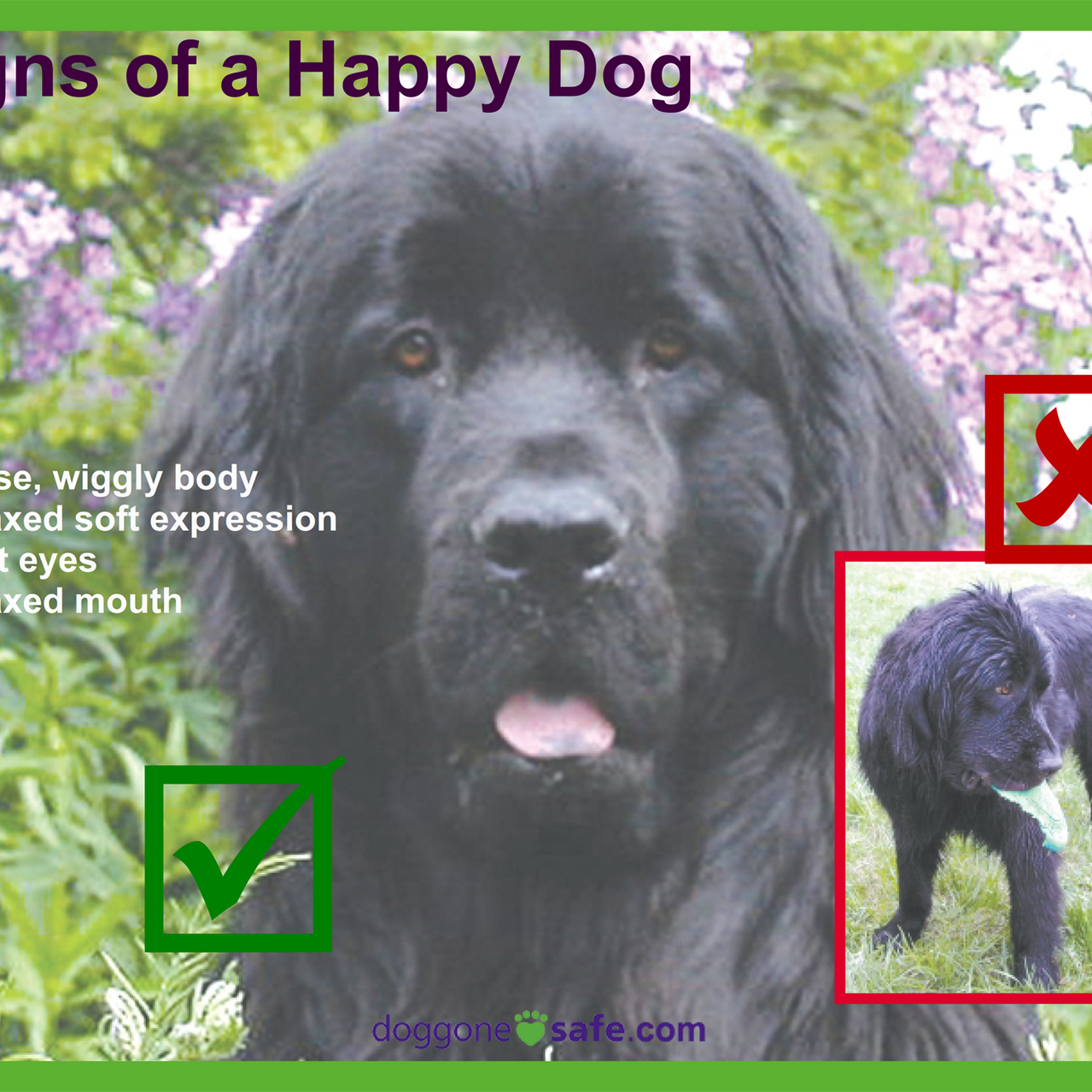 Signs of a Happy Dog and Stay Away_005