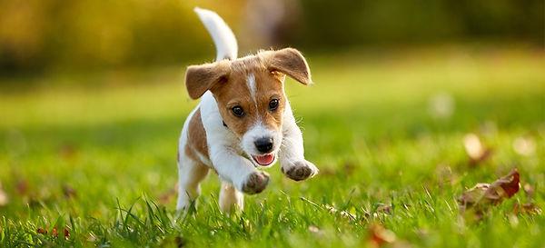small-puppy-running-outside-min.jpg