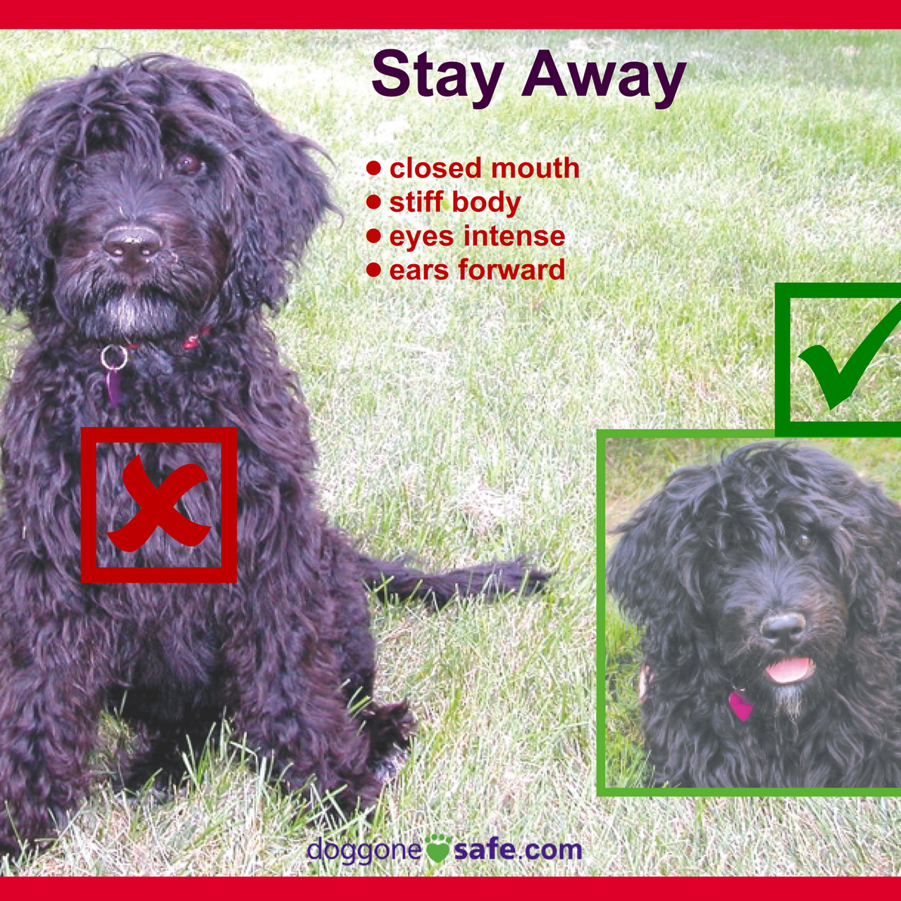 Signs of a Happy Dog and Stay Away_010