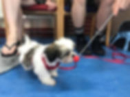 puppy training bermondsey