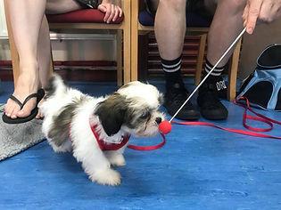 puppy training bermondsey