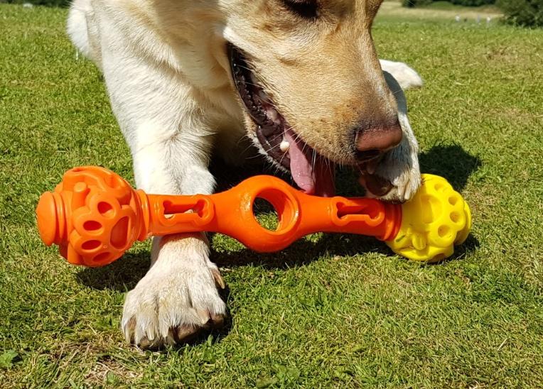 wanderdog, dog walker, bermondsey, training