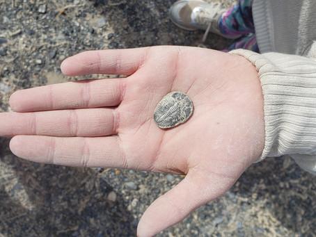 Fossil Hunting: Delta, Utah