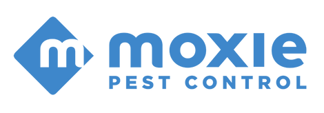 All Blue Moxie Logo.png