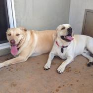 Smiling puppies