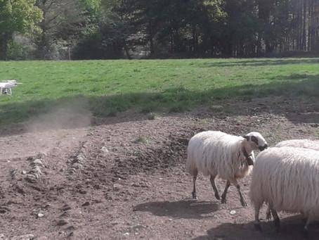 Delsat y La Finca Experimental La Garcipollera (CITA) firman un convenio para la ganadería extensiva