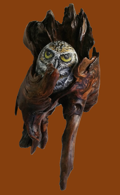 River rock owl