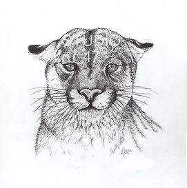 Canadian art, mountain lion art, cat art, west coast art, pencil art