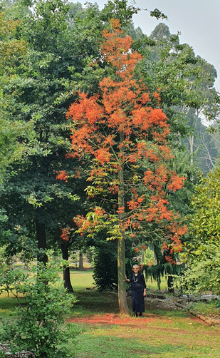 Sue with red tree Jan 2020-1 - Copy.jpg