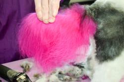 Pink Tail