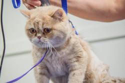 Cat Shave