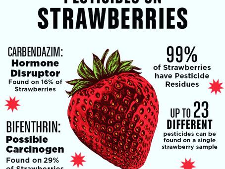 Pesticides + Poison = Cheap, Year-Round Strawberries