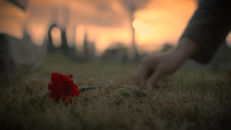 rose0.jpg
