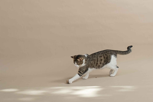 Kedi Topu Seti