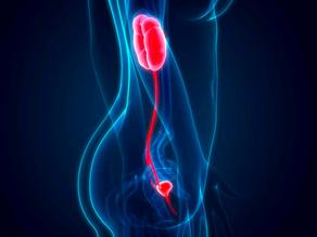 Pyélonéphrite : comment détecter et soigner l'infection du rein