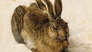 Albrecht Dürer - Young Hare