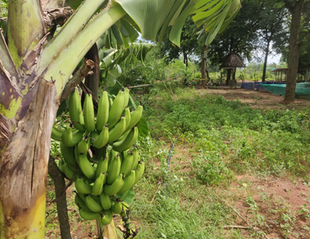 'Food-Forest Model' of Organic Farming - A REAL LIFE VALIDATION