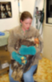 Photo of Hannah caring for injured raptor