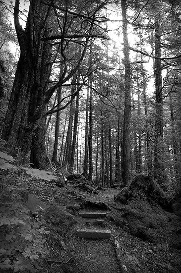 Fine Art Print: A Walk in The Woods