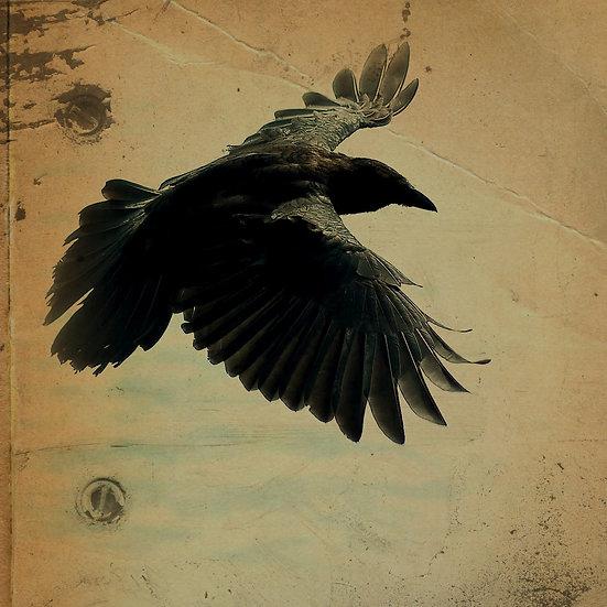 Fine Art Print:Raven Rivots