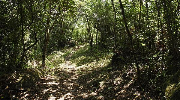 Guaraqueçaba - Morro Quitumbê.jpg