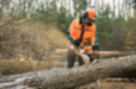 Chainsaw-Certificate-Guide.jpg