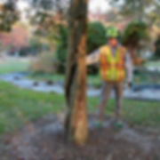 Tree-Inspection-1-800x800.jpg