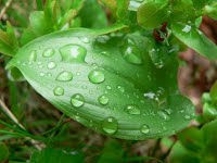 raindrops-on-green-leaf.jpg