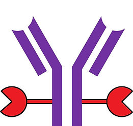 antibody with prot A red.jpg