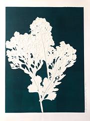 Monotype Série herbes folles