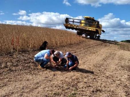 Emater/RS-Ascar monitora perdas na colheita da soja