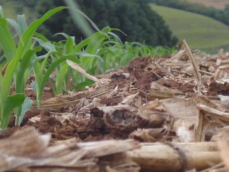 Ipiranga do Sul foi reconhecida pelo governo do RS como o Berço do Plantio Direto