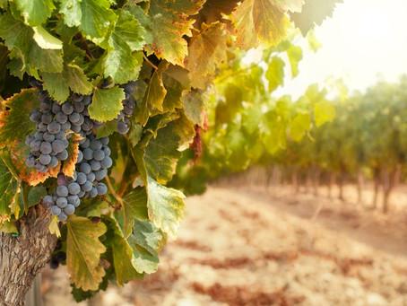 Produtores de uvas e vinhos devem se cadastrar no novo sistema do MAPA, até 3 de maio