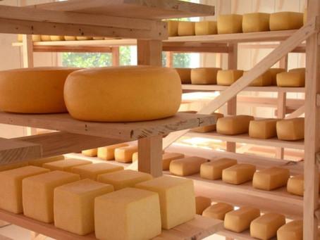 Produtores de queijo artesanal serrano podem aderir ao selo arte e vender o produto em todo o Brasil