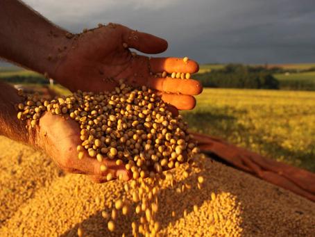 Safra brasileira de grãos 2021/22 indica recorde de 288 milhões de toneladas