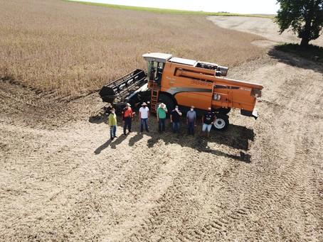 Ipiranga do Sul: aberta oficialmente colheita da soja