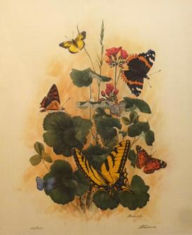 Butterflies of the Gunnison Valley