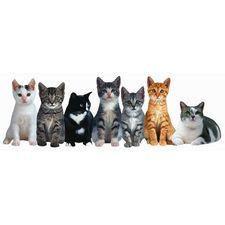 Row of Kittens Bookmark