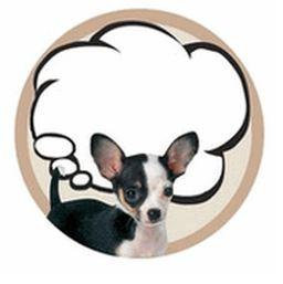 Really Cute Chihuahua Sticky Notes Pad