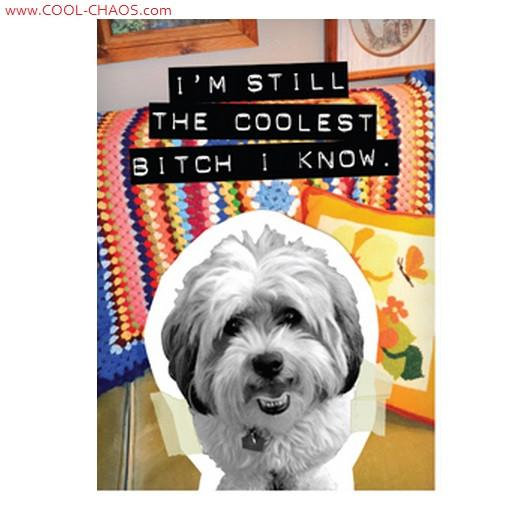 Coolest B*tch Bad Dog Maltese Magnet