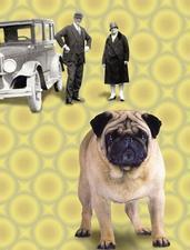 Retro 20s Pug Funny Greeting Card