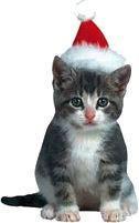 Holiday Kitten Magnet