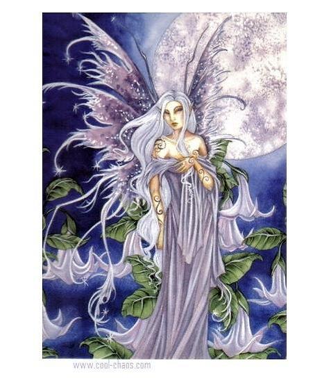 Night Blossom Fairy Postcard