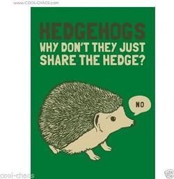 Cute Hedgehog Magnet