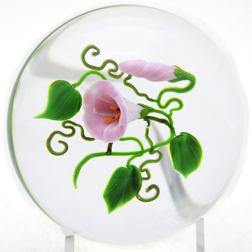 Large Victor Trabucco Morning Glory Flower Art Glass Paperweight