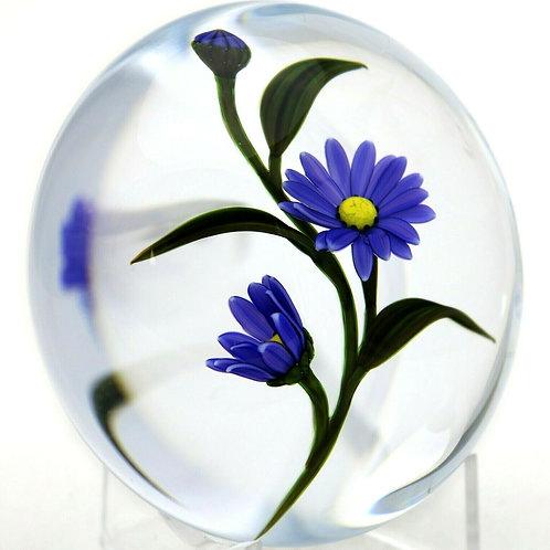Chris Buzzini Violet Aster Flower Art Glass Paperweight