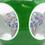 Thumbnail: Saint Louis Mushroom Millefiori Art Glass Paperweight 1953